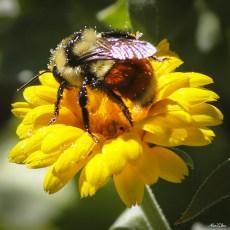 alexpullenwildflowers-9312