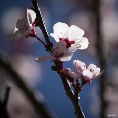 alexpullenwildflowers-9791