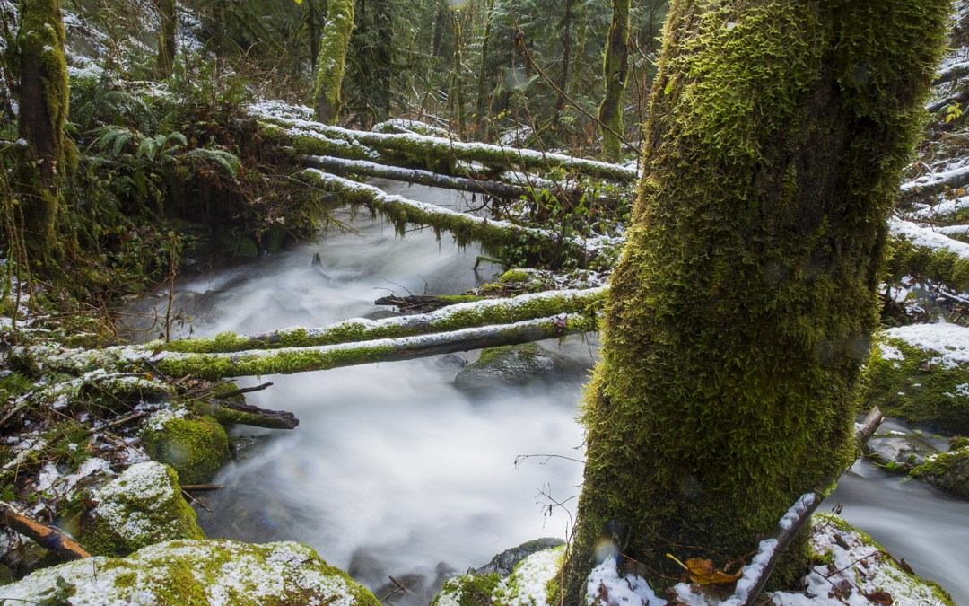 First Snow in the Rain Forest