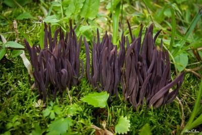 Alex Pullen Fungi Mushroom Photography-3949