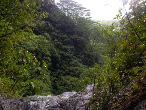 Top Of Manoa Falls Like A Young Egyptian King