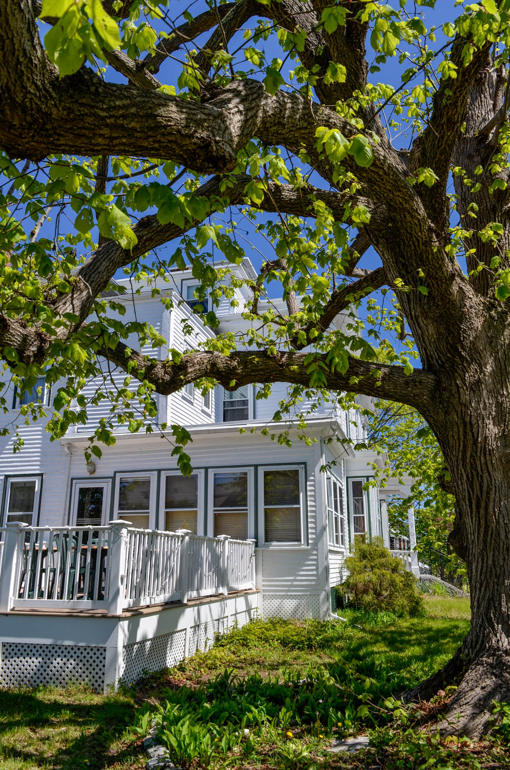 Linden Tree Inn
