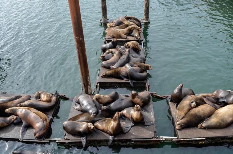Newport seals
