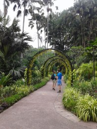 A tunnel of green. Туннель из тропической зелени.