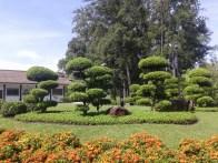 Beautiful bonsai garden. Красивый японский сад-бонсай.