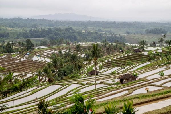 Bali – Dag 5 – Jatiluwih