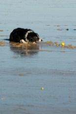 alex-woodhouse-photography-cornwall-dog-beach-winter