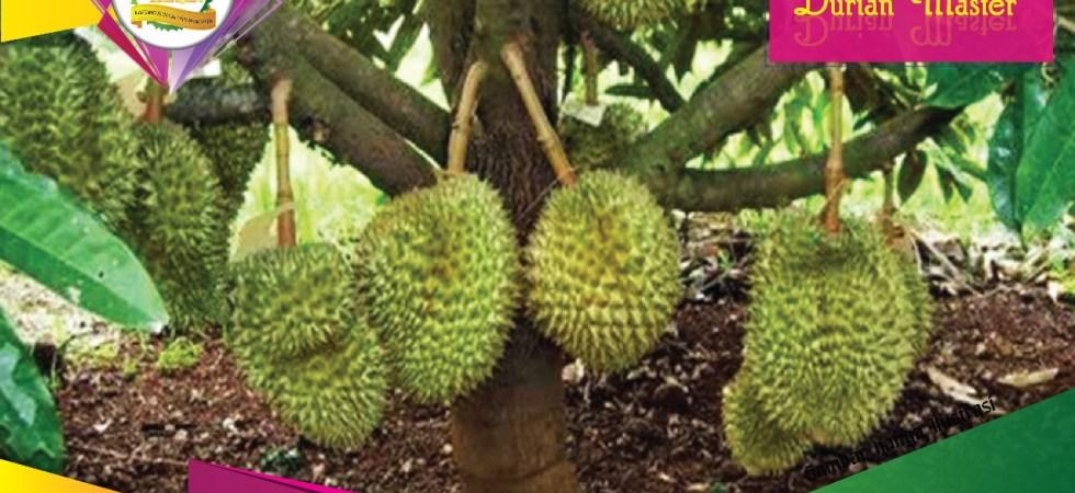 Kebun Durian Master - Plan Fasilitas Kavling Sunnah Purwakarta