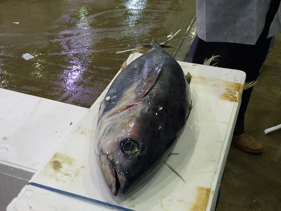 Pavillon de la Marée MIN De Rungis Marché au poisson thon rouge