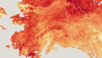 Photo of Alaska se 'derrite', registra calor histórico