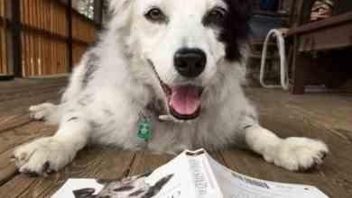Photo of Murió Chaser, el perro más inteligente del mundo