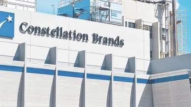 Photo of Acciones de Constellation Brands caen tras el NO en consulta