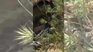 Photo of Hallan fosa clandestina con varios cadáveres en Tijuana