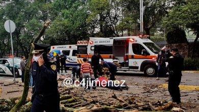 Photo of FOTO: Mujer sale de casa en su bici y le cae un árbol encima