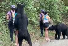Photo of Oso capturado en Monterrey fue castrado: Profepa