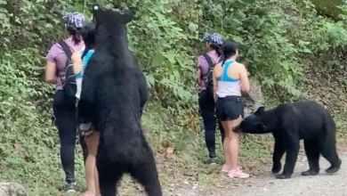 Photo of Deportistas se encuentran con un oso en su caminata