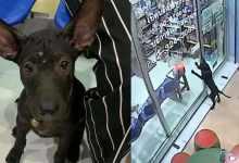 Photo of VIDEO: Perro se pierde y va con su veterinario para que lo ayude