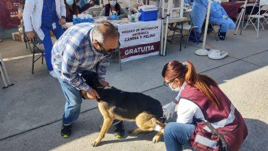 Secretaria-de-Salud-invita-vacunar-mascotas-contra-rabia