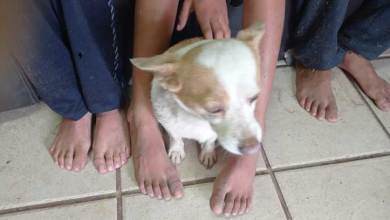 niño-casi-se-ahoga-por-intentar-salvar-perrito
