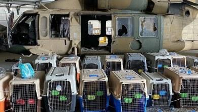 El-Pentagono-niega-que-abandonara-perros-en-Afganistan