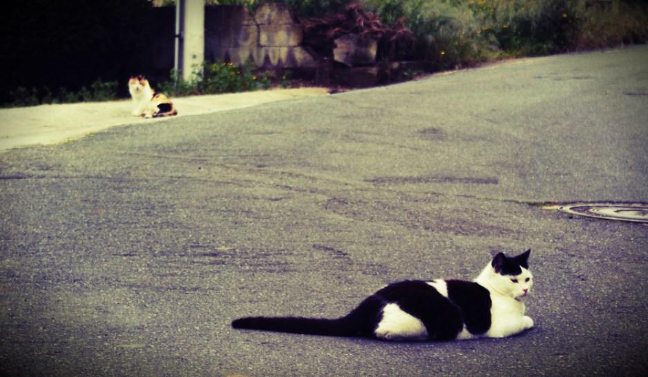 Fotografia Gatos da Pedreira por Alfredo Ferreiro