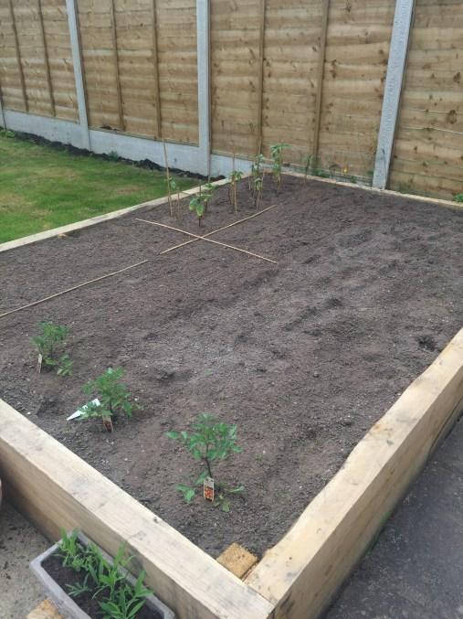 The new veggie plot