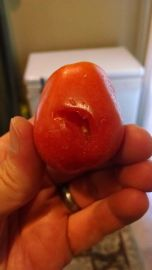Something decided to help itself to one of my tomatoes. Grr.