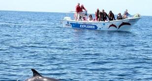 ophelia-catamaran41