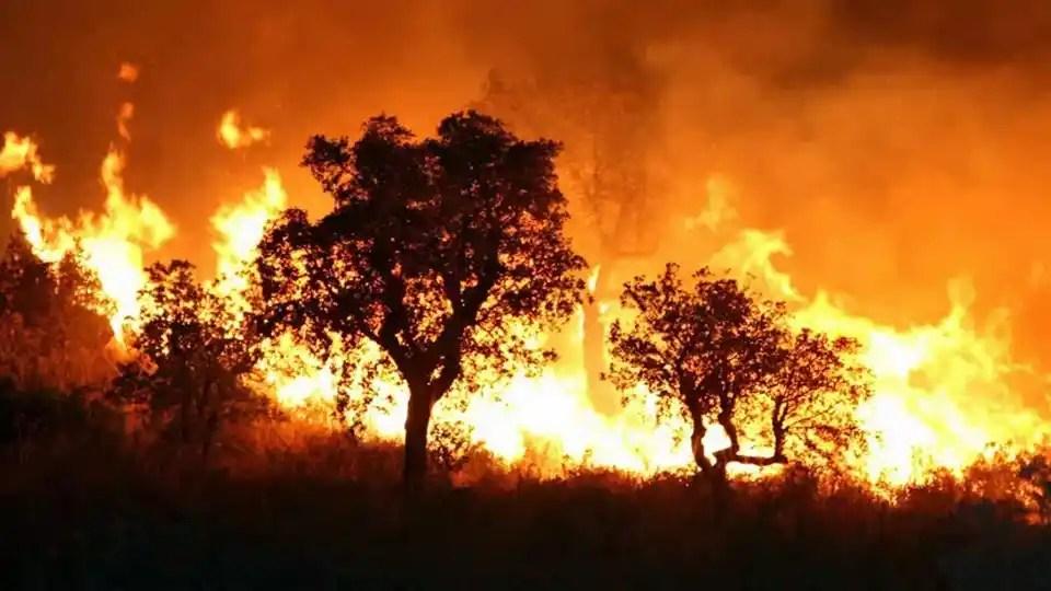 incendiés algérie