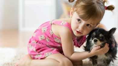 Photo of لعبة سهلة لتعريف الطفل بالحيوانات