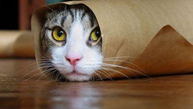 Photo of الدفاع المدني ينقذ قطة علق رأسها بعلبة حديدية (فيديو)