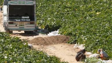 Photo of الكوز: إجراءات احترازية لحماية المزروعات في وادي الأردن