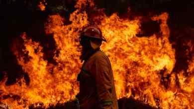 "Photo of بعد 40 عاما.. ""الشجرة الخادعة"" تقتل رجل إطفاء أسترالي"
