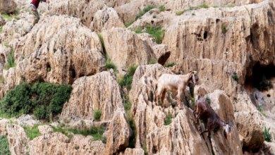 Photo of على قمم الجبال