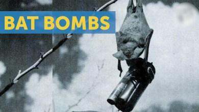 مخطط لاستخدام قنابل الخفافيش في مهاجمة المدن اليابانية في الحرب العالمية الثانية - المصدر: ريبلي