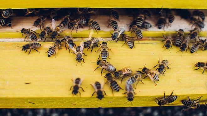 تناقص أعداد النحل يهدد إمدادات الغذاء العالمية Alghad
