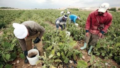 Photo of تحويل الأزمة إلى فرصة في الأمن الغذائي والمياه