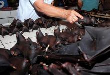 تجهيز خفافيش بعد اصطيادها تمهيدا لبيع لحومها في أندونيسيا - أرشيفية