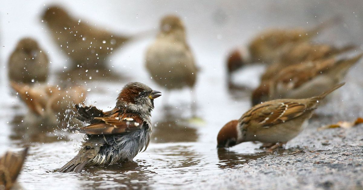 اليوم العالمي للطيور المهاجرة