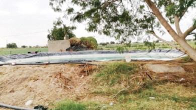 Photo of الكرك: أزمة نقص العمال تهدد استمرار الزراعة