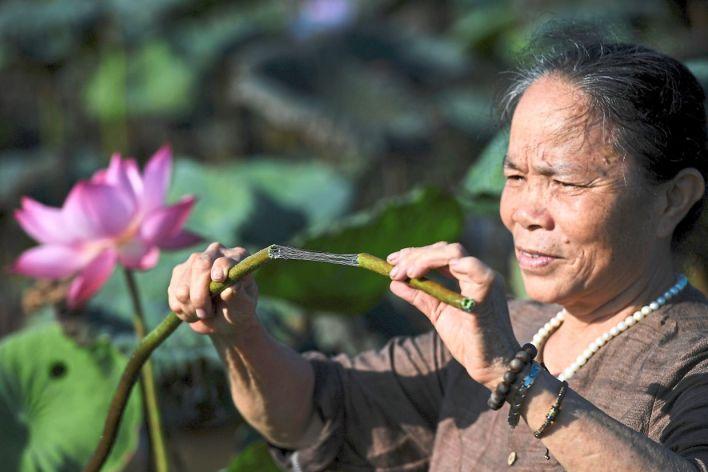 الحائكة بان تي توان خلال جمع زهر اللوتس