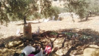 Photo of عجلون: الحظر يدفع مزارعي زيتون للتخييم بمزارعهم لقطف الثمار