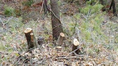 "Photo of غابات عجلون: ""مافيات"" تحطيب.. وطوافون بأعداد وإمكانات محدودة"