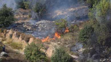 Photo of وزيرا البيئة والزراعة يتفقدان مواقع متضررة من الحرائق في عجلون
