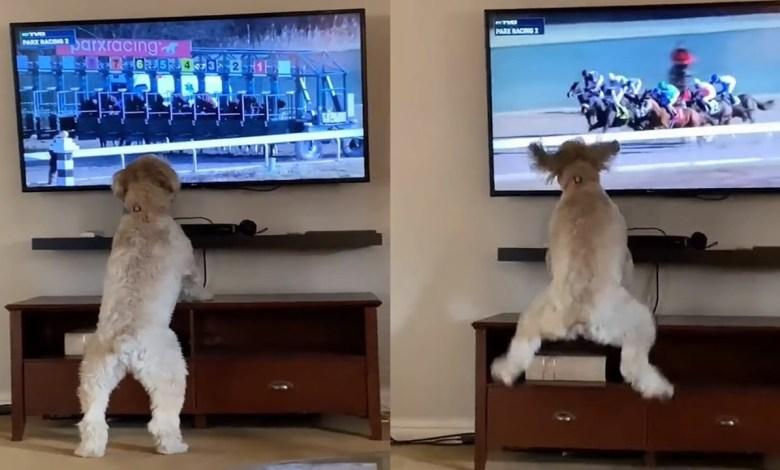 "Photo of أكثر من مليوني مشاهدة لهذا الكلب -""فيديو"""