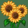 Sunflowers Categoria: Flowers Coste: 135 Tiempo crecimiento: 23 Horas Monedas que produce: 315 XP que produce: 2 Tamaño: 4x4
