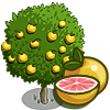 Grapefruit Tree Regalo Monedas que produce: 50 Se vende por: 29