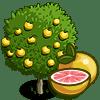 Grapefruit Tree Regalo Monedas que produce: 50 Se vende por: 29