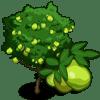 Guava Tree Regalo Monedas que produce: 55 Se vende por: 34