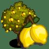 Lemon Tree Coste: 475 Monedas que produce: 41 Se vende por: 24